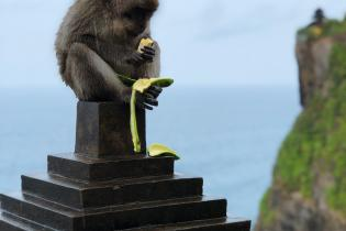 Monkey on statue on top of cliff eats a banana.